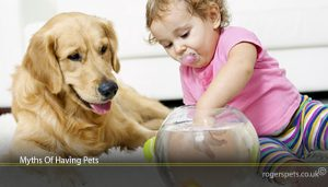 Myths Of Having Pets