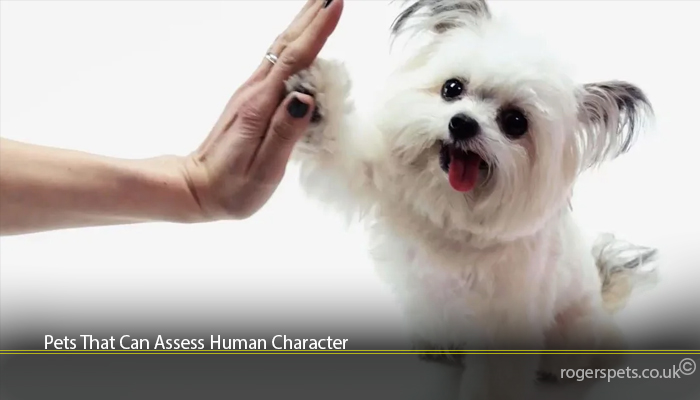 Pets That Can Assess Human Character