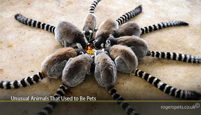 Unusual Animals That Used to Be Pets