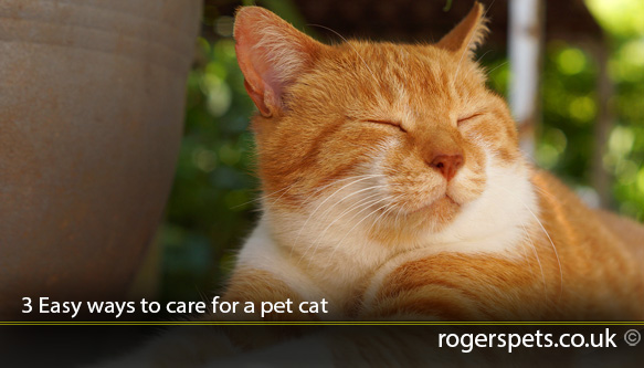 3-Easy-ways-to-care-for-a-pet-cat