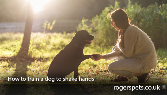 How-to-train-a-dog-to-shake-hands.