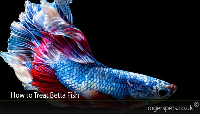 How to Treat Betta Fish