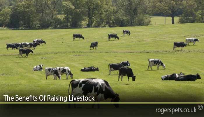 The Benefits Of Raising Livestock