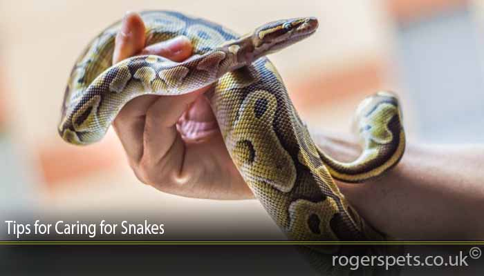 Tips for Caring for Snakes