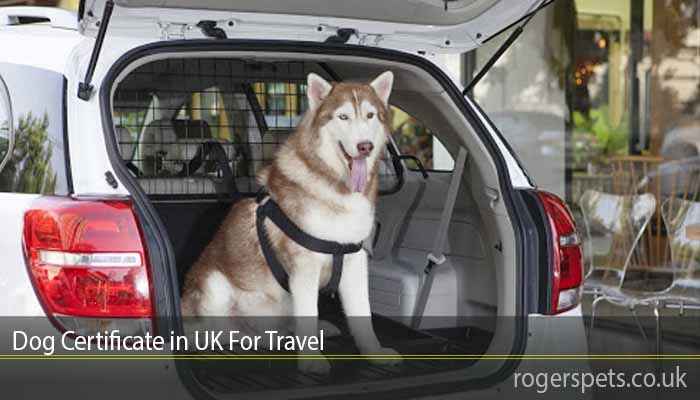 Dog Certificate in UK For Travel