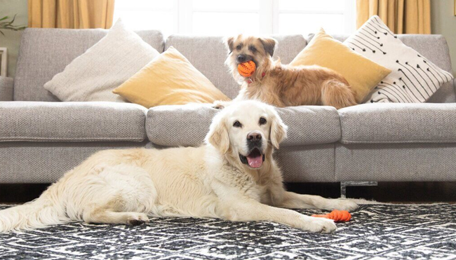 How to Get Rid of Pet Odors at Home