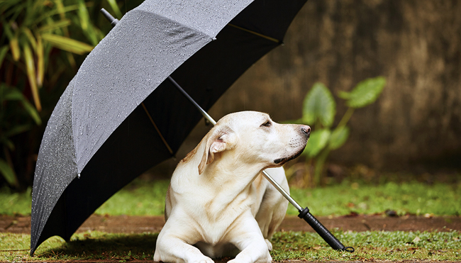Tips for Caring for Pet Dogs During the Rainy Season